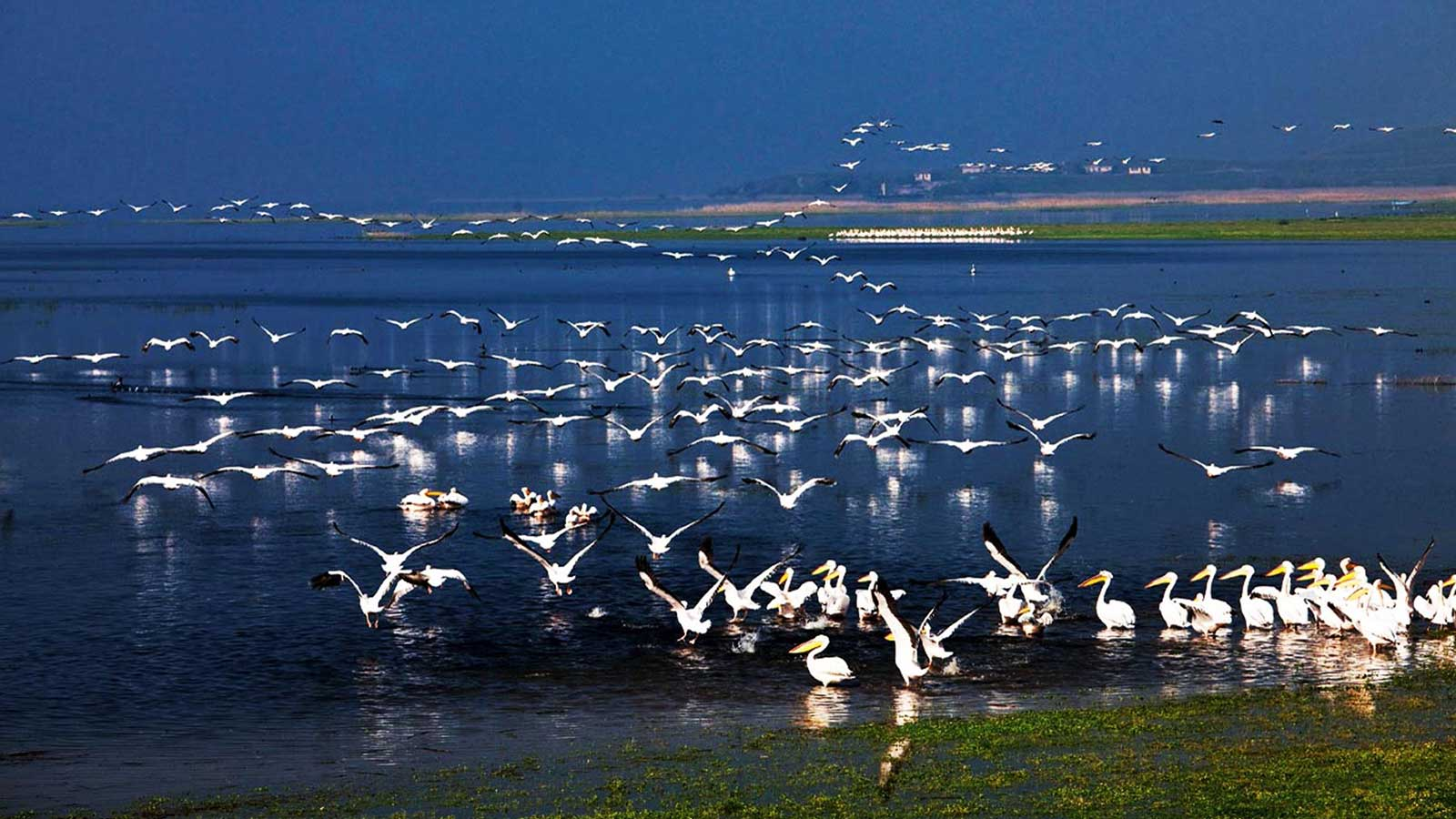 Manyas Bird Paradise National Park