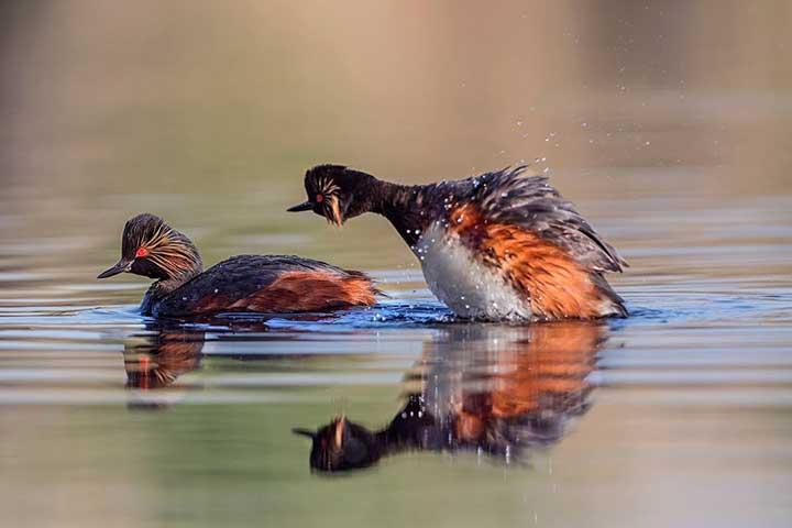 Bird Species Marsh Turkish