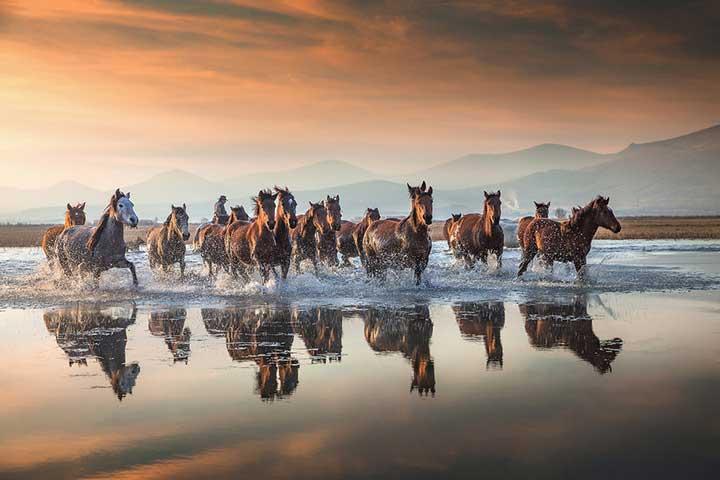 Wild Horses Cappadocia Marsh